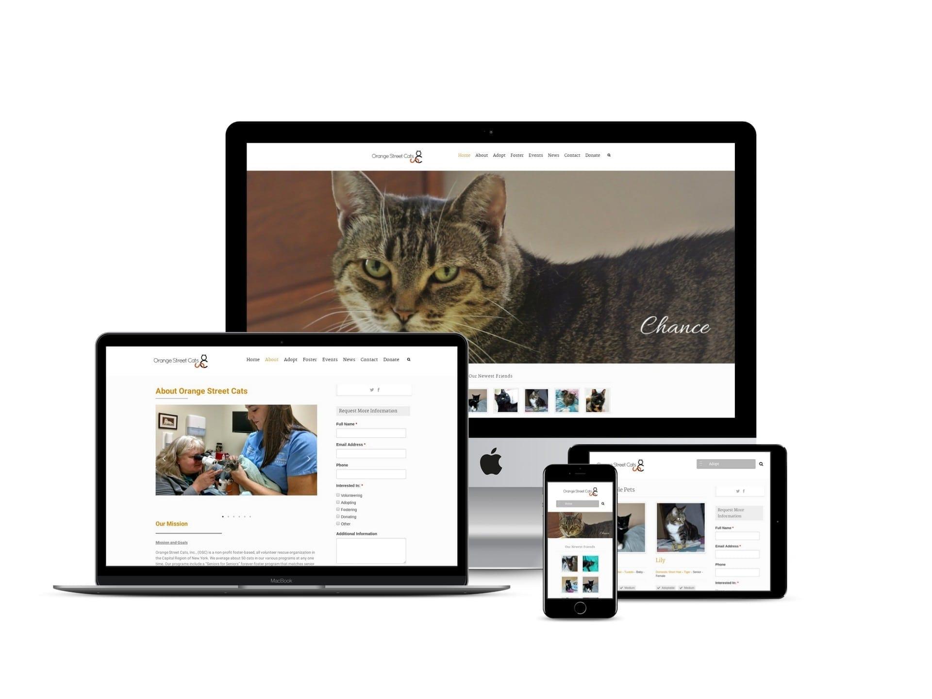 Albany NY Website Design
