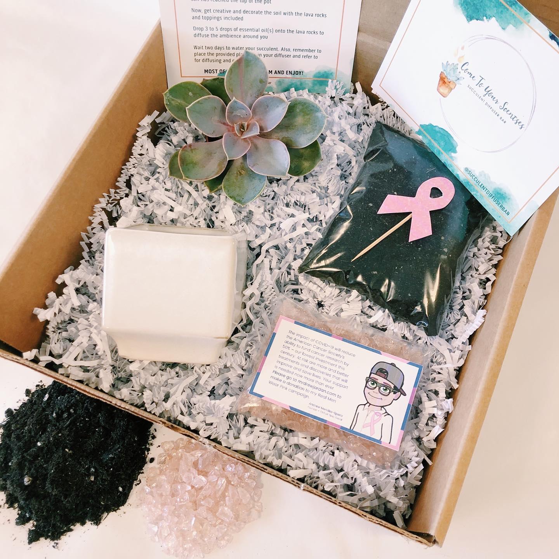 Pink DIY Succulent Kit in Box